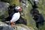 Nesting birds: advice for climbers