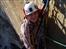 Ella Kirkpatrick: on climbing El Cap